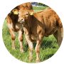 MULTIMIN® 90 Trace Minerals for Calves